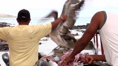 Yellowfin tuna, Thunnus albacares, HD, UP26421 Stock Footage