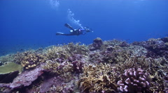 Videographer swimming on shallow coral reef in Solomon Islands, HD, UP26859 Stock Footage