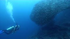 Housed SLR photographer swimming on rocky reef with Black-striped salema in Stock Footage