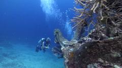Male model scuba diver swimming on wreckage with Elephant ear sponge in Solomon Stock Footage