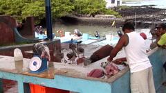 Juvenile Yellowfin tuna, Thunnus albacares, HD, UP26431 Stock Footage