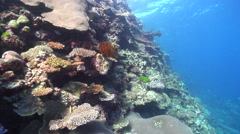 Ocean scenery on shallow wall, HD, UP16439 Stock Footage