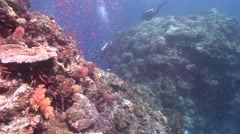 Buddy team of scuba divers exploring on beautiful healthy and diverse reef with Stock Footage