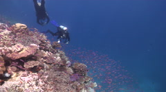 Group of scuba divers swimming on shallow coral reef with Magenta slender - stock footage