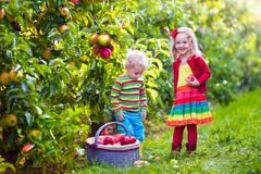 Kids picking fresh apples from tree in a fruit orchard - stock photo