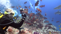 Group of scuba divers swimming in fish feeding arena with Grey reef shark Red Stock Footage