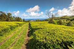 Tea plantation in Porto Formoso. Amazing landscape of outstanding natural bea Stock Photos