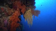Ocean scenery on deep wall, HD, UP16786 Stock Footage