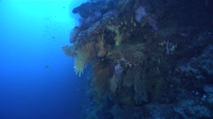 Ocean scenery approach, then pans down the wall, on deep wall, HD, UP16789 Stock Footage