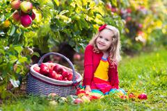 Stock Photo of Little girl picking apples from tree in a fruit orchard