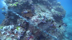 Anchor chain slicing into coral bommie, underwater, anchor damage, HD, UP16913 Stock Footage