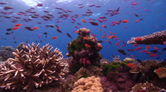 Ocean scenery beautiful, lots of action, on shallow coral reef, HD, UP16960 Stock Footage