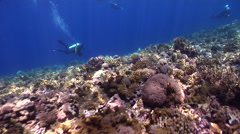 Videographer swimming on shallow coral reef in Solomon Islands, HD, UP27922 Stock Footage