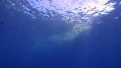 Ocean scenery eating coral spawn slick, on water surface, HD, UP27916 - stock footage