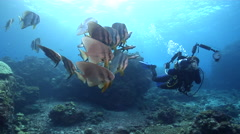 Housed SLR photographer swimming on shallow coral reef with Blunthead batfish in Stock Footage