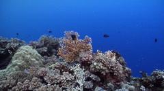 Ocean scenery on deep coral reef, HD, UP26958 Stock Footage