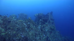 Ocean scenery lots of baitfish, on current swept hull, HD, UP26731 Stock Footage