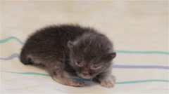 Born clumsy little kitten on white fabric Stock Footage