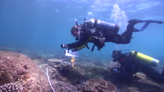 Scientific diver swimming on rocky reef in Australia, HD, UP26670 Stock Footage