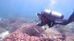 Scientific diver swimming on shallow coral reef in Australia, HD, UP26679 Stock Footage