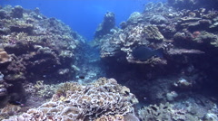Ocean scenery on shallow coral reef, HD, UP26850 Stock Footage
