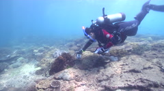 Scientific diver swimming on shallow coral reef in Australia, HD, UP26702 Stock Footage