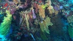 Ocean scenery on deep wall, HD, UP17306 Stock Footage