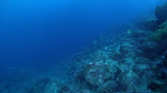 Spotted eagle ray swimming on rocky reef, Aetobatus ocellatus, HD, UP26348 Stock Footage