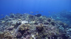 Ocean scenery on shallow coral reef, HD, UP26849 Stock Footage