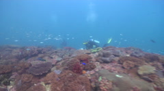 Scientific diver on rocky reef with Unidentified mushroom leather coral in Stock Footage