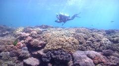 Scientific diver swimming on shallow coral reef in Australia, HD, UP26694 Stock Footage