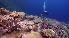Videographer taking images on shallow coral reef in Solomon Islands, HD, UP26867 Stock Footage