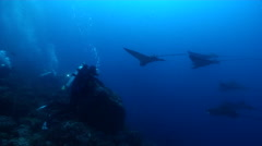 Group of scuba divers swimming on rocky reef with Spotted eagle ray in Galapagos Stock Footage