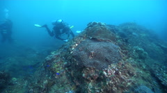 Scientific diver in Australia, HD, UP26505 Stock Footage