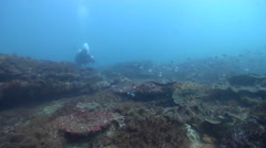 Scientific diver swimming on rocky reef in Australia, HD, UP26583 Stock Footage