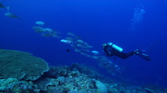 Female model scuba diver swimming on deep coral reef with Bigeye trevally in Stock Footage