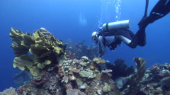 Male model scuba diver looking around on wreckage with Elephant ear sponge in Stock Footage