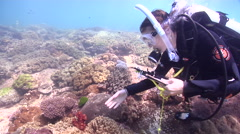 Scientific diver wafting on shallow coral reef in Australia, HD, UP26685 Stock Footage