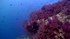 Ocean scenery very slow swimover, beautiful, current, lots of action, on shallow Stock Footage