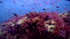 Ocean scenery beautiful, current, lots of action, on shallow coral reef, HD, Stock Footage