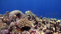 Ocean scenery on shallow coral reef, HD, UP27912 Stock Footage