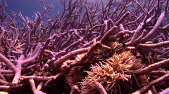 Ocean scenery on shallow coral reef, HD, UP27522 Stock Footage