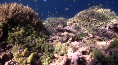 Ocean scenery on very shallow reef and surface, HD, UP27479 Stock Footage