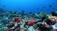 Ocean scenery lots of other species of fish and coral, on deep coral reef, HD, - stock footage