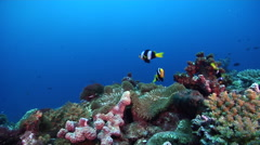 Ocean scenery on deep coral reef, HD, UP27973 Stock Footage