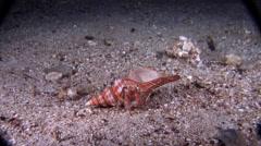Longeye hermit crab feeding at night, Dardanus lagopodes, HD, UP18011 Stock Footage