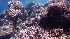 Ocean scenery on very shallow reef and surface, HD, UP27485 Stock Footage