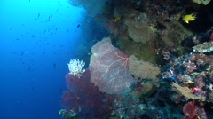Ocean scenery nice fans, on deep wall, HD, UP27045 Stock Footage