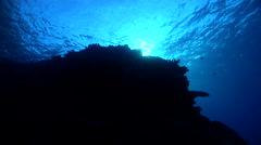 Underwater ocean scenery on coral reef, HD, UP27925 Stock Footage