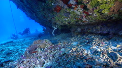 Ocean scenery diver stops to look under hull, on deep coral rubble, HD, UP27572 Stock Footage